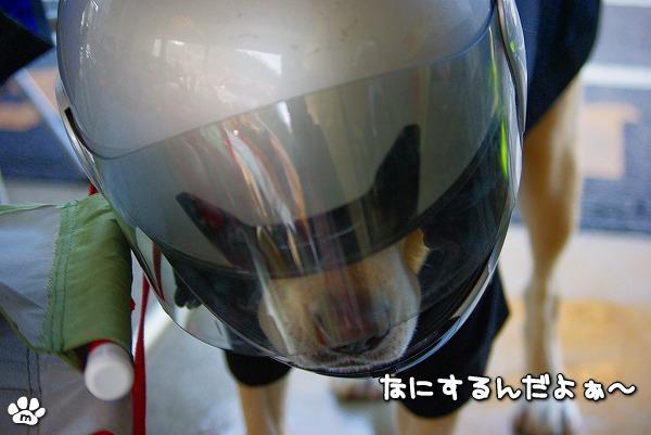 s-myu2009_1228_3