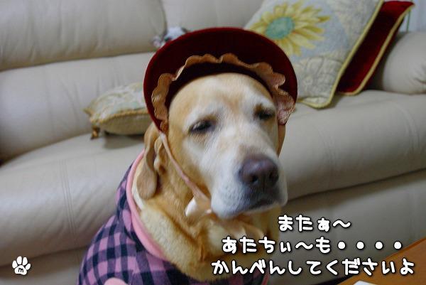 s-myu2009_1231_11