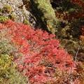 Photos: 11月21日「紅葉」