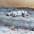 Photos: 寝てるイヌ