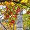 写真: 秋色探し