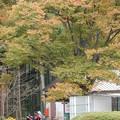 Photos: 秋本番を迎えます