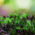 写真: -静寂なる小さな森-