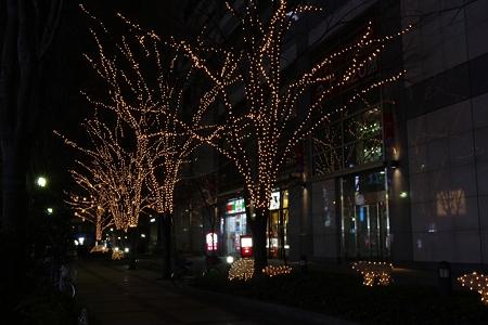 ライトアップの木々