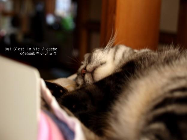 秋の寝床。(秋を告げる猫)