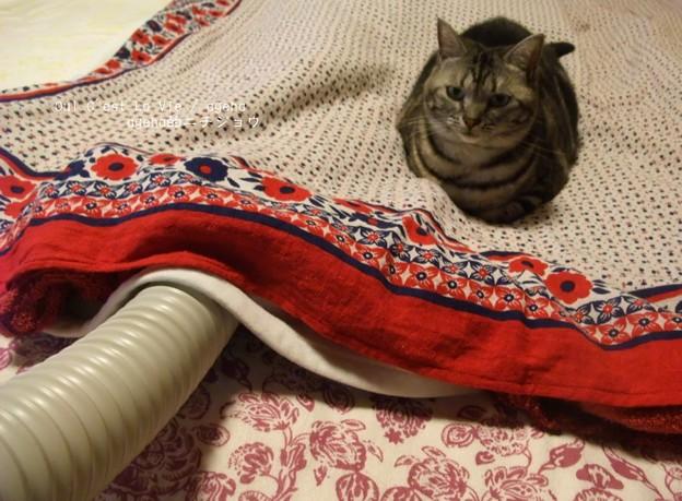 布団乾燥機のぬくもりを満喫中。