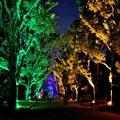 京都府立植物園の楠並木
