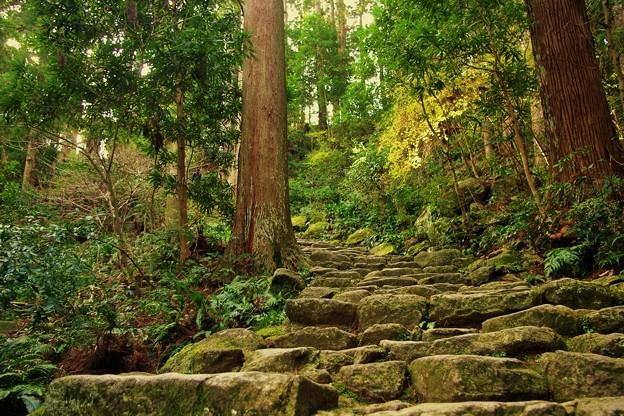 写真: 熊野古道