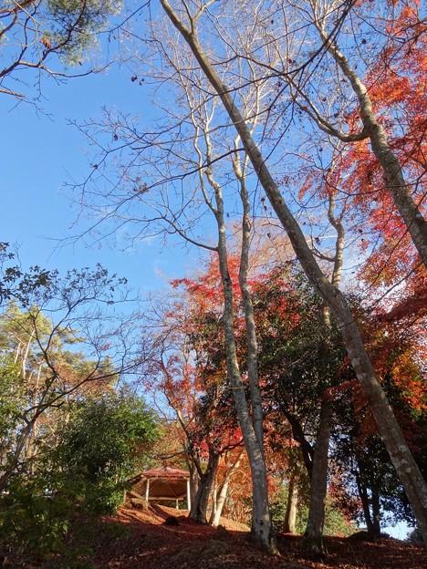 扇谷 散り紅葉と四阿