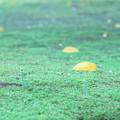 Photos: 秋の足音。。