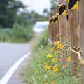 Photos: 秋の道。