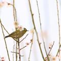 Photos: 春の知らせを感じて-2