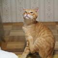 写真: 2010年9月8日のボクチン(6歳)