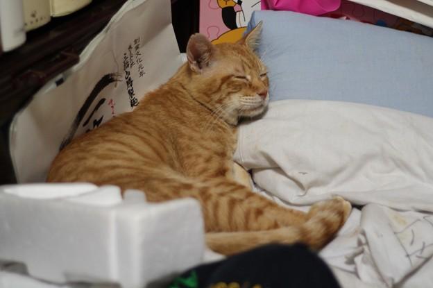 写真: 2010年9月26日のボクチン(6歳)