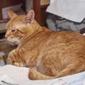 写真: 2010年10月8日のボクチン(6歳)