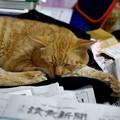 Photos: 2011年10月14日のボクチン(7歳)