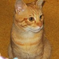 写真: 2008年10月22日のボクチン(4歳)