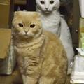 写真: スコちゃん(雄)とシロちゃん(雌)2歳