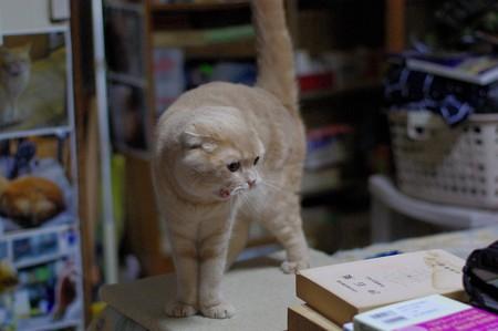2016年5月9日のスコちゃん(雄3歳)