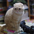写真: 2016年5月9日のスコちゃん(雄3歳)