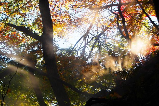 秋の木漏れ日と湯気