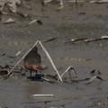 写真: ピラミッドパワー