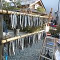 Photos: 干物の実演販売