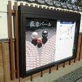 Photos: 浜幸パール