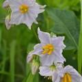 Photos: 棘のある花