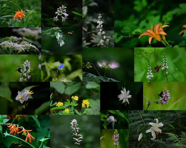 野山の花々