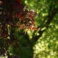 写真: 光葉