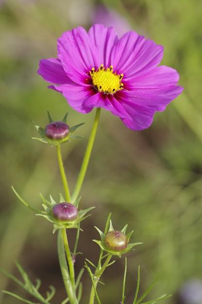 初めての花撮り(2)