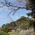 写真: 2本の木、危ないと思う