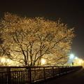 夜桜・・旧三中グランド方向
