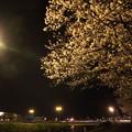 夜桜・・水俣橋手前
