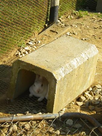 ポティロンの森 うさぎさんトンネルに避難
