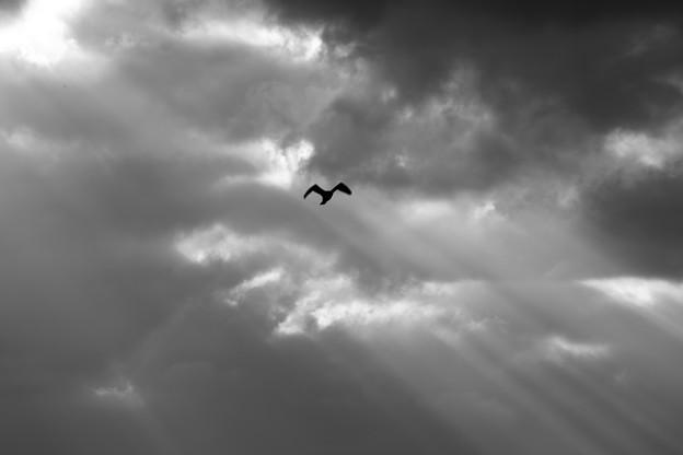 Photos: 冬空を舞う