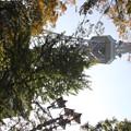 写真: 20111104名古屋テレビ塔 (2)