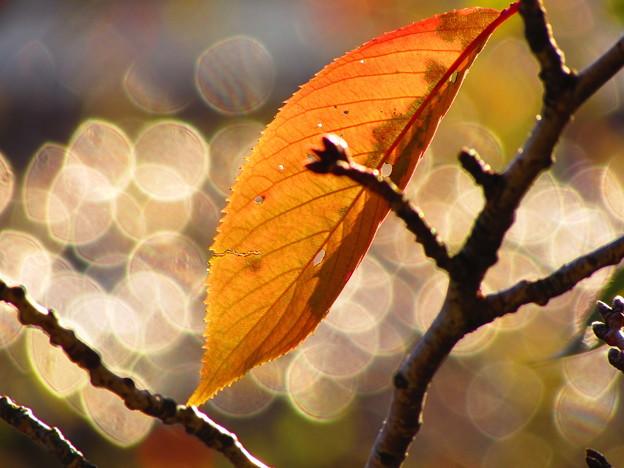 秋色一枚輝いて
