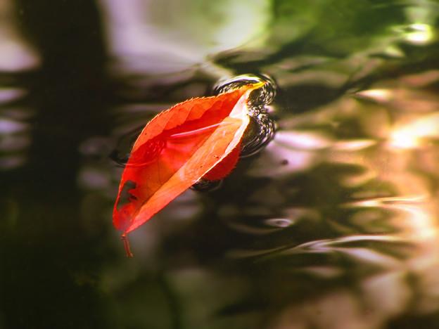 秋色、小川に流るる