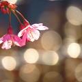 写真: 春一番に、揺れる、きらめく、輝きまくる