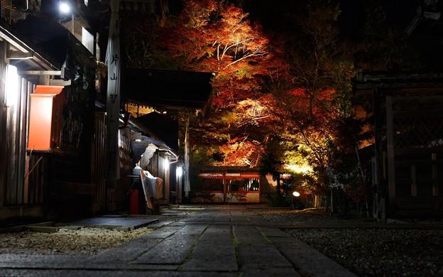 鍬山神社・ライトアップ35