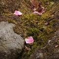 写真: 花びら