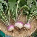 Photos: 収穫野菜10