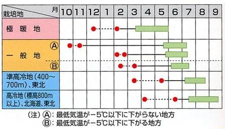 スナップエンドウ 種 【スナック】
