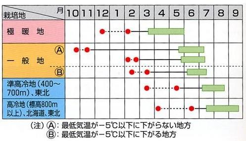 Photos: スナップエンドウ 種 【スナック】
