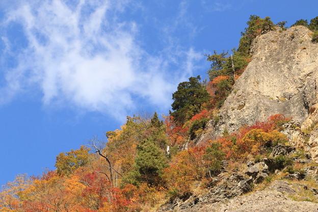 Photos: 紅葉と白い雲