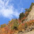 紅葉と白い雲