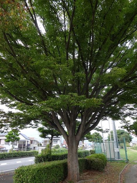 この~木♪何の木♪?