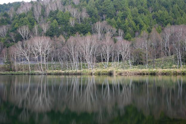 木戸池 (4)